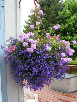 Back Saving Hanging Flower Baskets