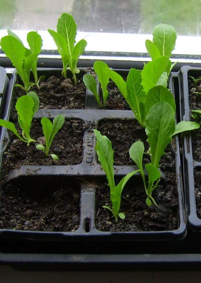 Why is it Best to Use Durable Plastic Flower Pots for Seedlings?