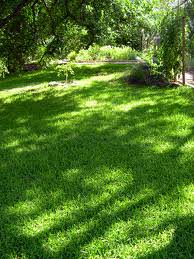 How to Grow Lawn Like a Carpet