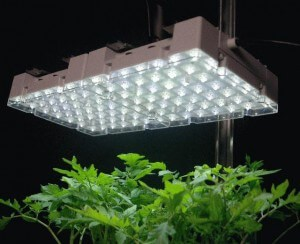 What are Fluorescent Grow Lights?
