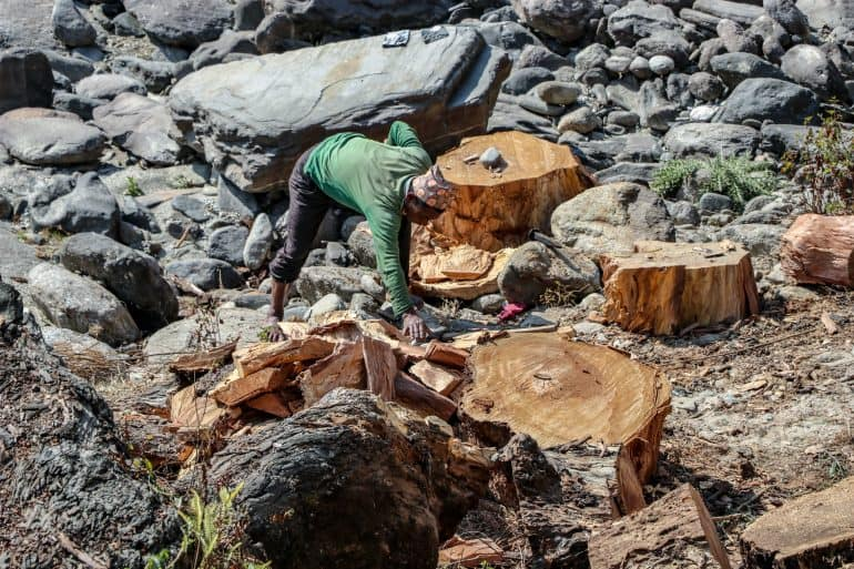 manually removing tree stumps