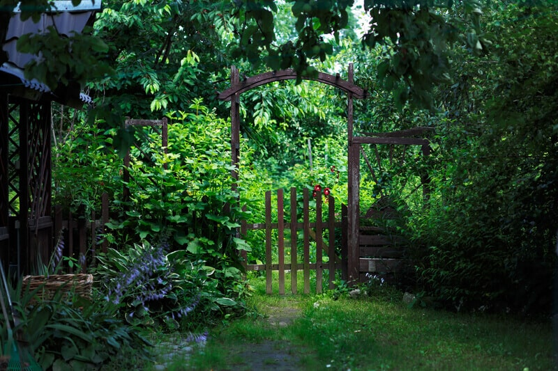A gate to a green blooming garden in the middle of a warm summer.