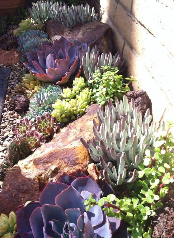 15 Amazing Rock Garden Design Ideas