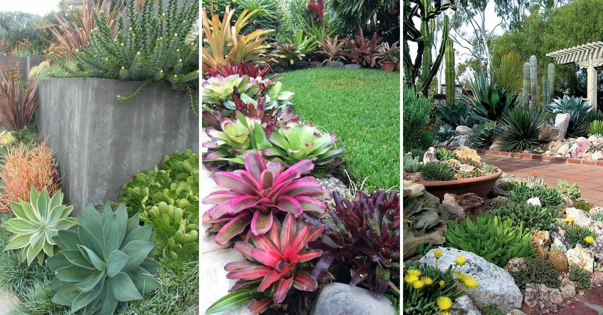 15 Amazing Succulent Decorating Ideas