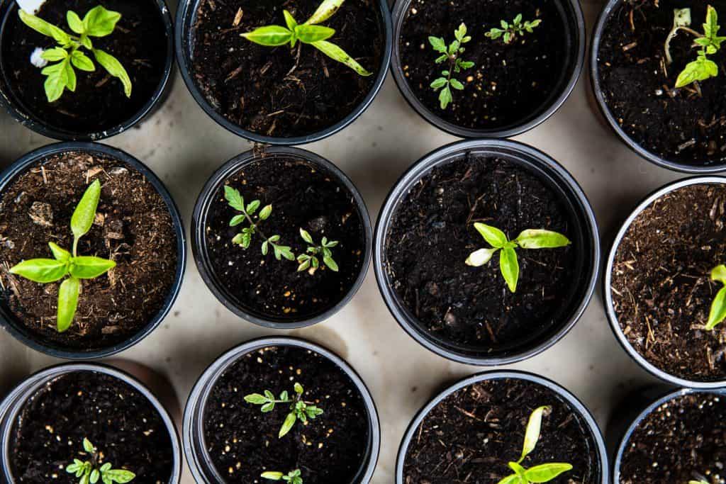 Gardening for Gratitude