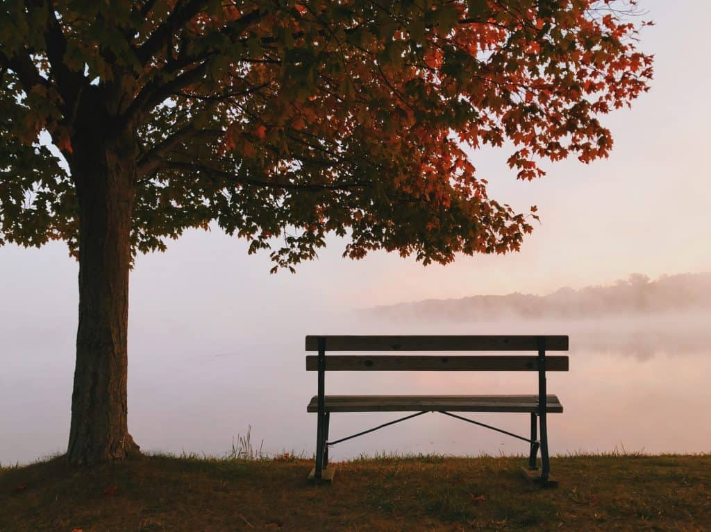 Bench Under Tree Foggy