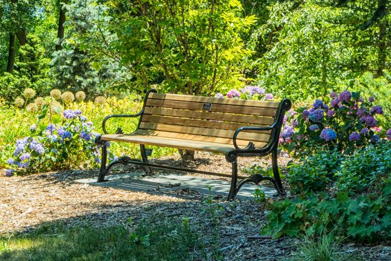 Garden bench in beautiful greenery