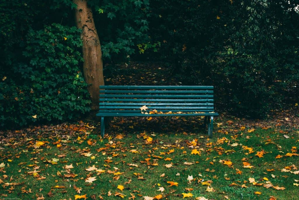 Dark Green Bench