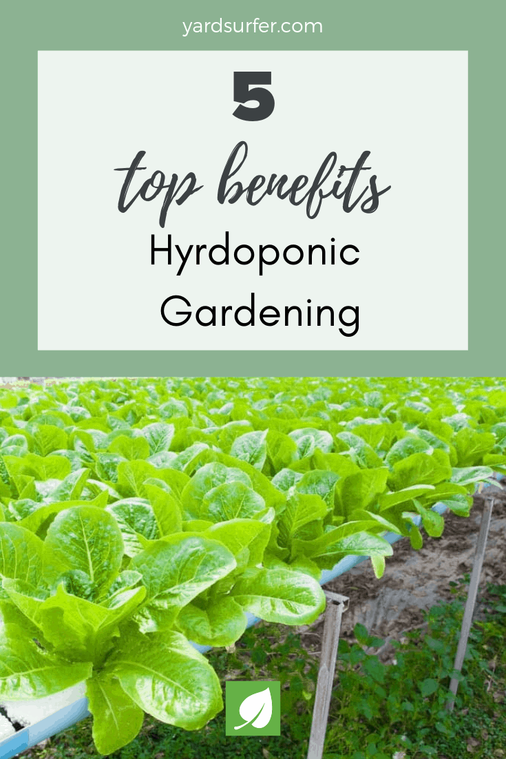 5 Benefits of Hydroponic Gardening and 5 Disadvantages