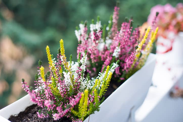 flowers planter box