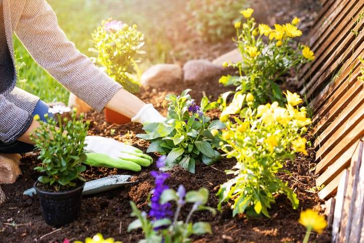 planting flowers in backyard