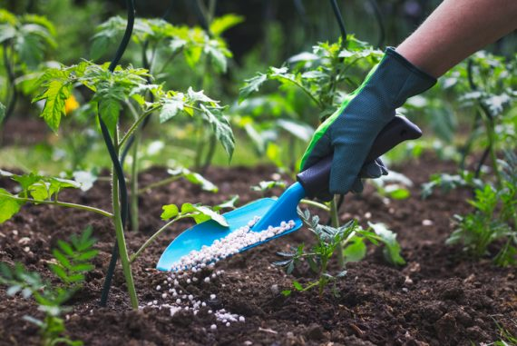 best fertilizer featured