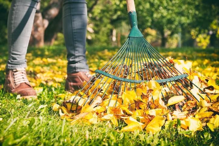 best leaf rake featured
