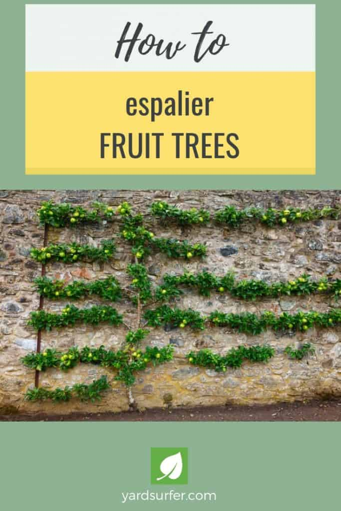 How to Espalier Fruit Trees