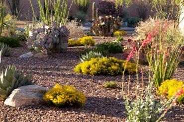 10 Desert Landscaping Ideas