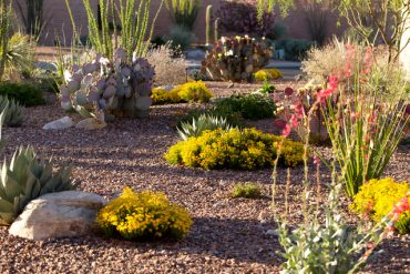10 Desert Landscaping Ideas