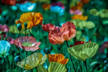 Best Flowers to Plant in Front Flower Beds