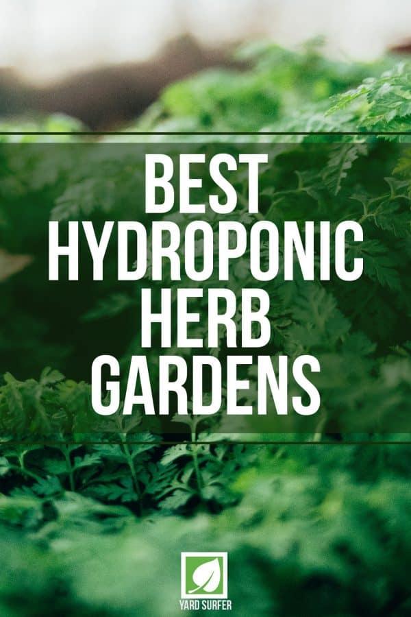 Best Hydroponic Herb Gardens