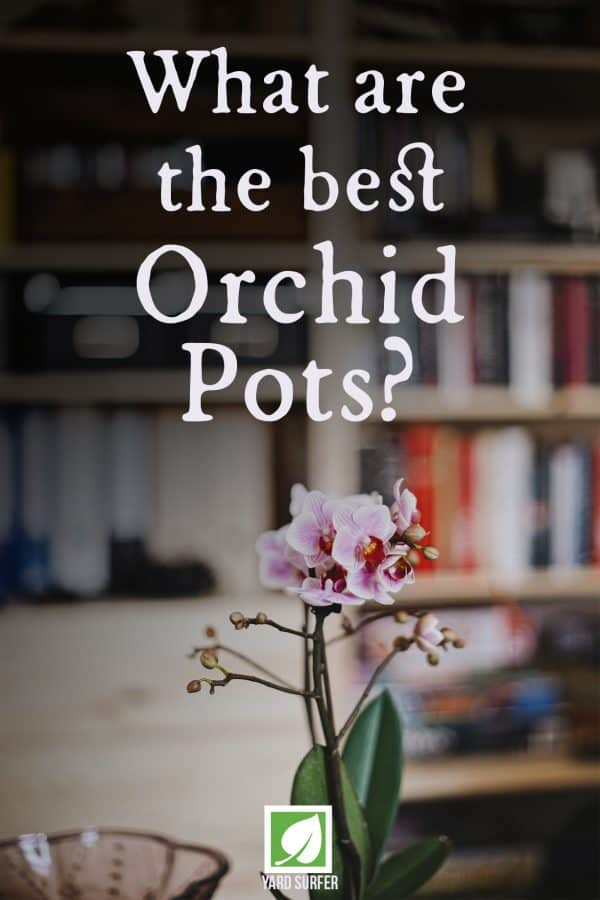 What are the Best Orchid Pots?