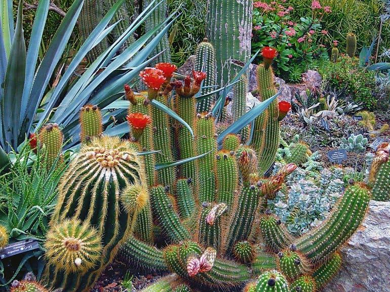 The Ultimate Plant Propagation Guide