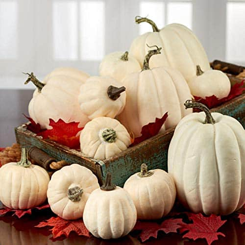 harvest white pumpkins