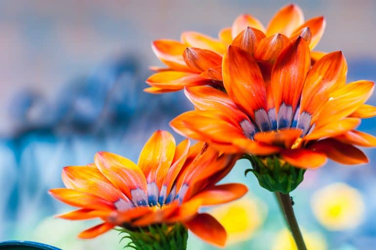Garden Poetry and Quotes for Garden Mystics