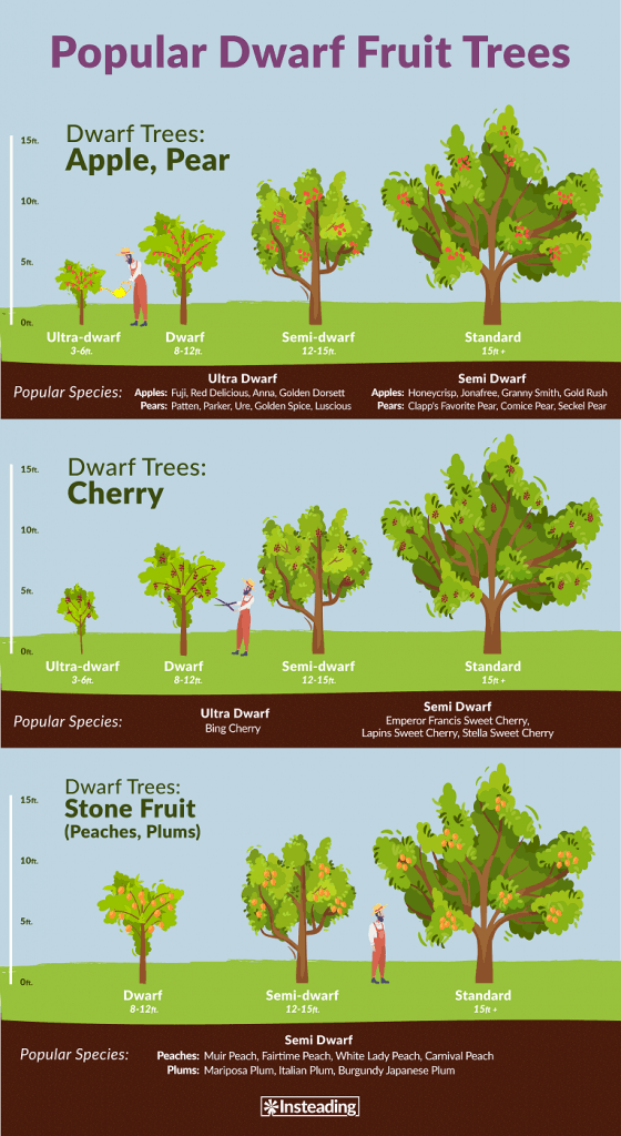 How To Espalier Fruit Trees What It Is