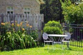 backyard garden plants featured image