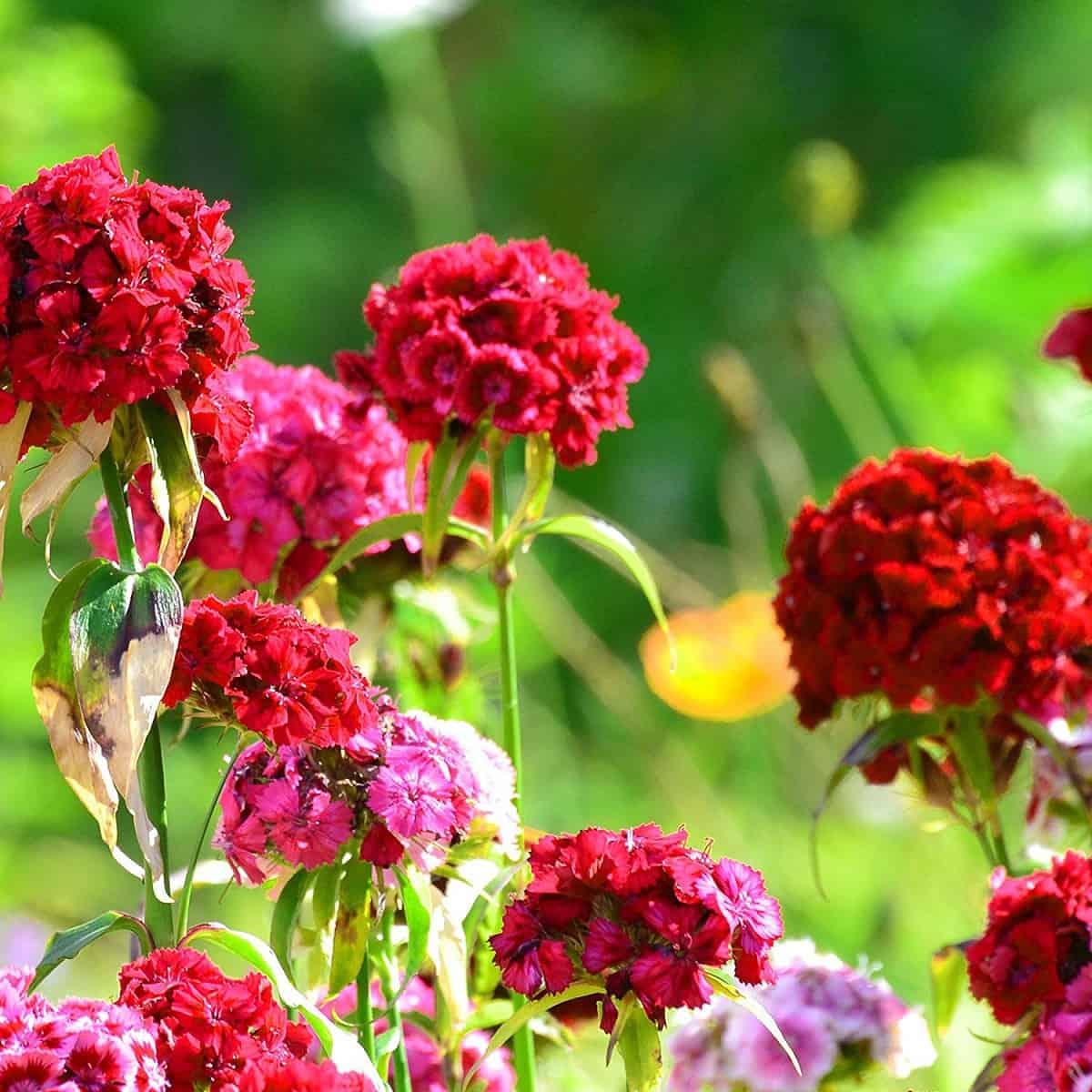 Guide to Backyard Garden Plants