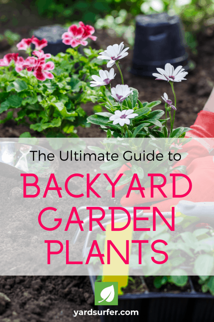 backyard garden plants guide