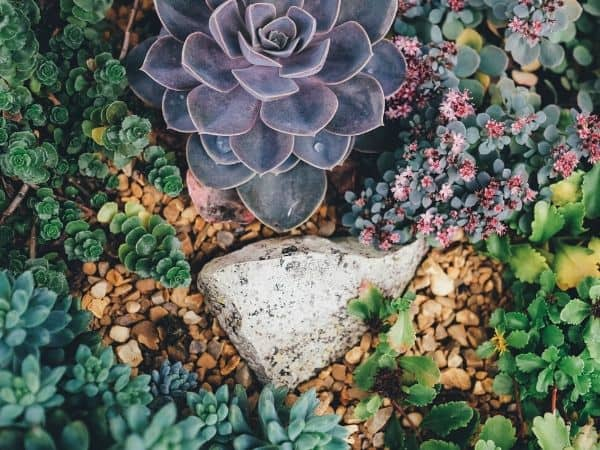 Types Of Succulents With Pictures Indoor Plants Yard Surfer