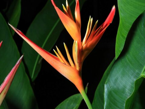 Types of Tropical Plants for Your Garden