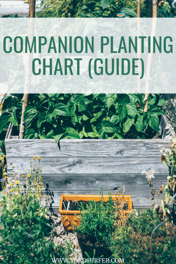 Companion Planting Chart (Guide)