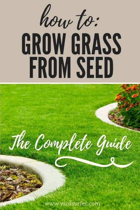 Growing Grass From Seed