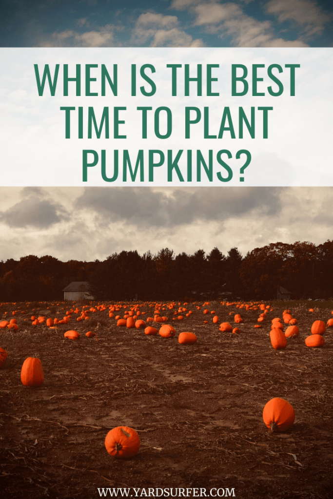 Best Time to Plant Pumpkins