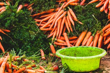 Best Time to Plant Carrots