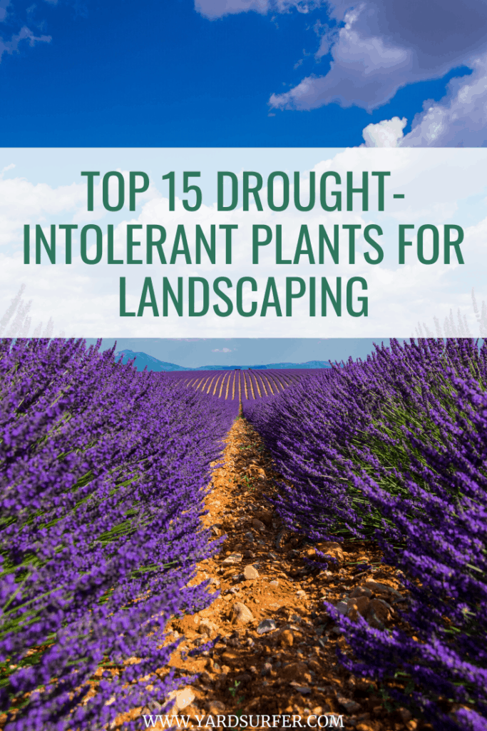 Top 15 Drought-Intolerant Plants for Landscaping