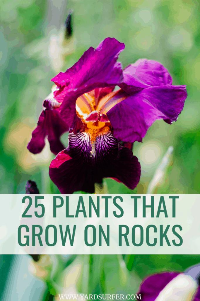 25 Plants That Grow on Rocks
