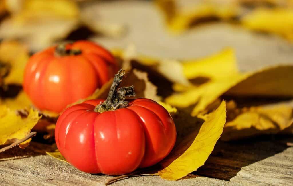 Types of Tomato Plants