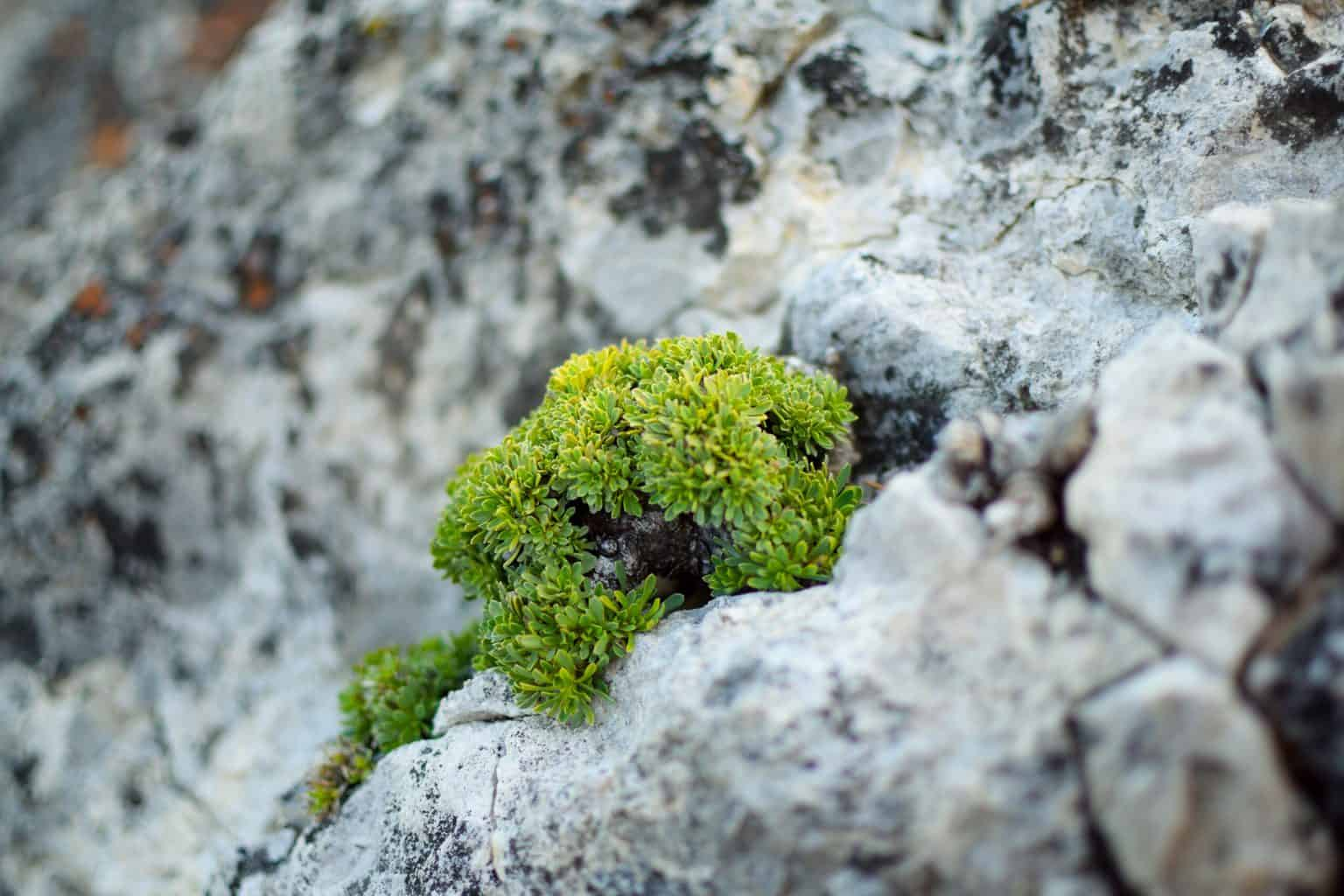 25 Plants That Grow on Rocks