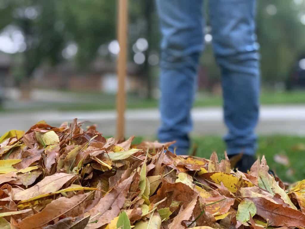 Best Way to Rake Leaves