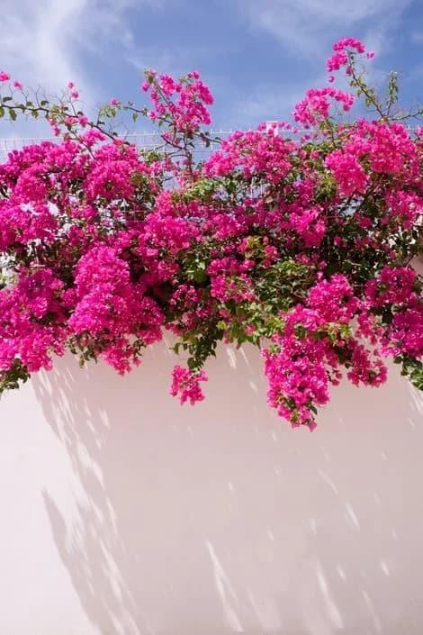 Types of Desert Plants