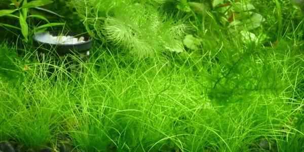Types of Aquarium Plants