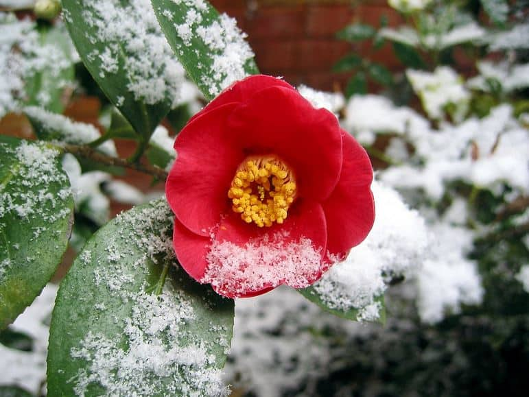 Best Winter Garden Plants