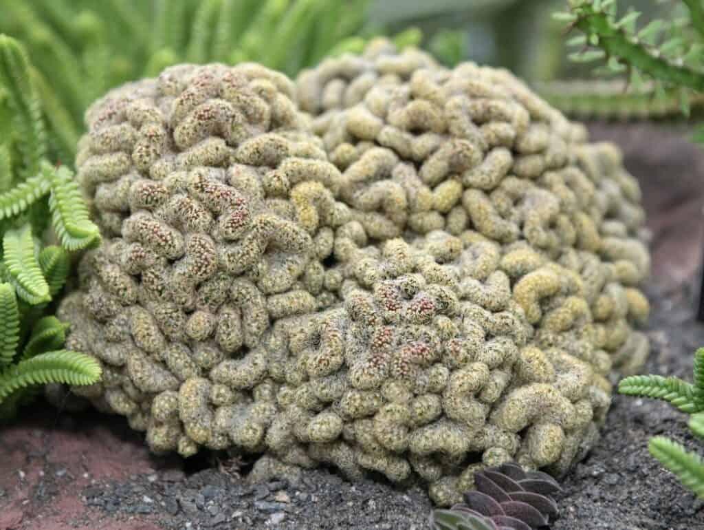 Types of Cactus Plants