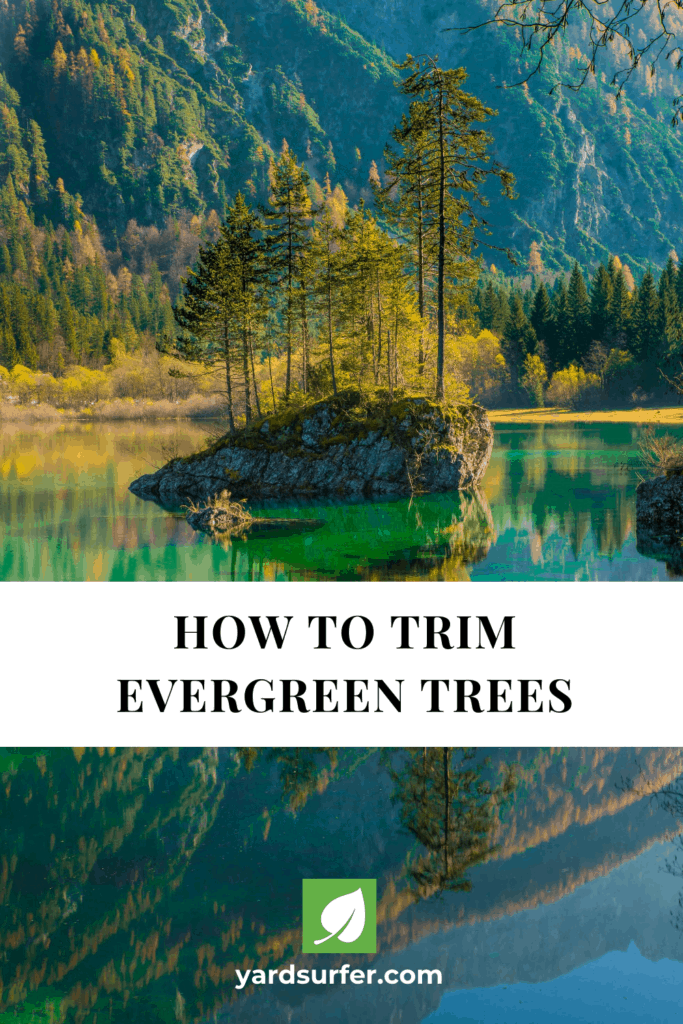 How to Trim Evergreen Trees