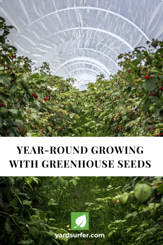 Year-Round Growing With Greenhouse Seeds