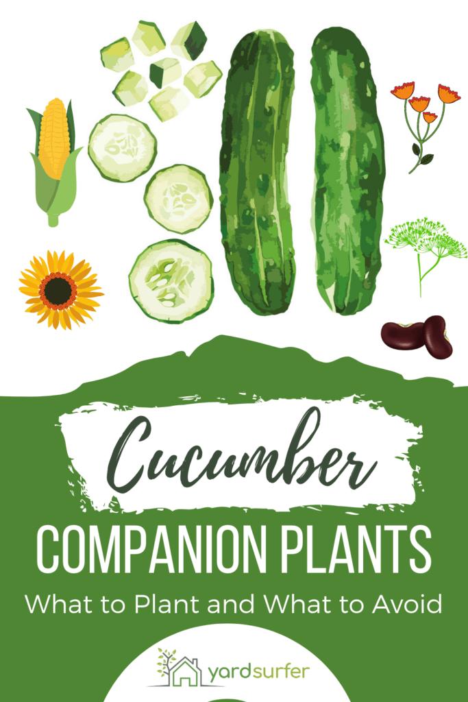 cucumber companion plants