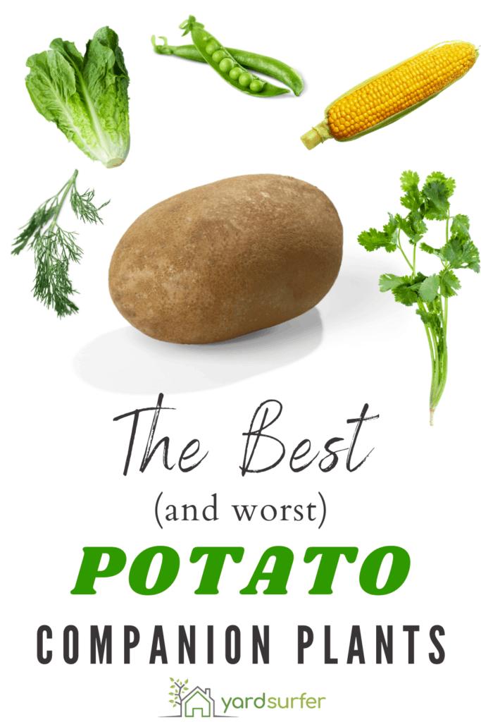 potato companion plants