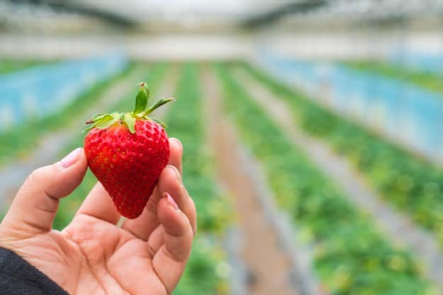 strawberry companion plants